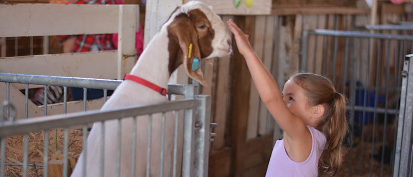 Garrett County Fair Animal Barns